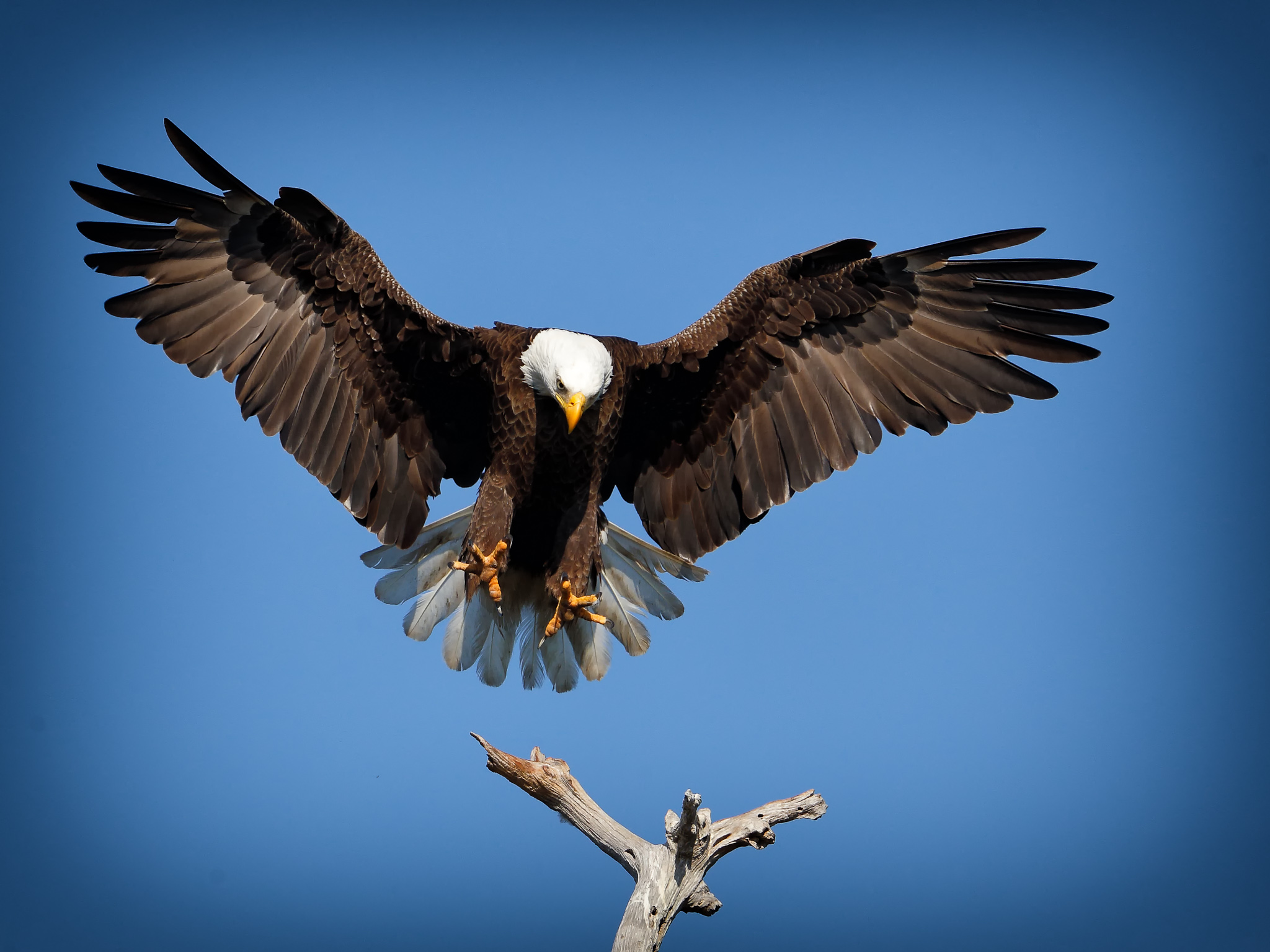 the eagle landing by - photo #2